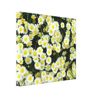 Toile Fleurs de bouton de marguerite jaune et blanche,