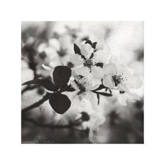 Toile Fleurs de cerisier dans la copie noire et blanche