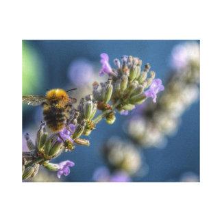 Toile Gaffez l'abeille se reposant sur la lavande avec