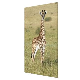 Toile Girafe de bébé à Nairobi