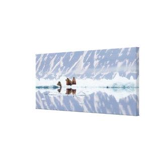 Toile Groupe de morses sur la glace