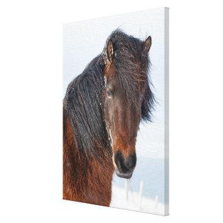 Toile Headshot islandais majestueux de cheval