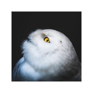 Toile Hibou blanc de Milou d'hiver