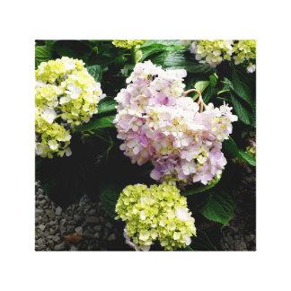 Toile Hortensia blanc
