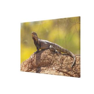Toile iguane Épineux-coupé la queue sur la roche