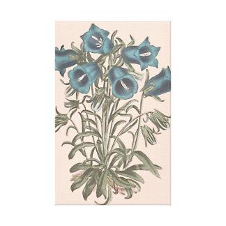 Toile Illustration botanique alpine de fleur de Bell