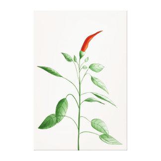 Toile Illustration botanique d'usine de poivre de piment