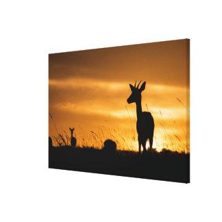 Toile Impala au coucher du soleil