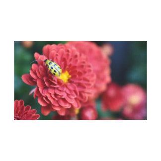 Toile Insecte rouge d'insecte de scarabée de