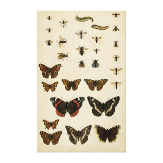 Toile Insectes de jardin par le studio de vision