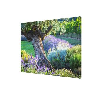 Toile Jardin pittoresque avec des fleurs, France