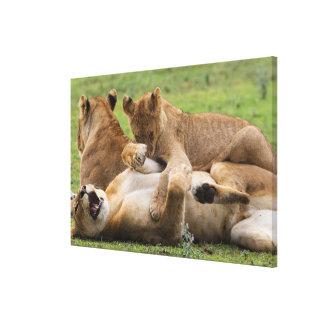 Toile Jeu de clubs de lion