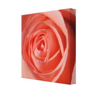 Toile La spirale douce d'un rose