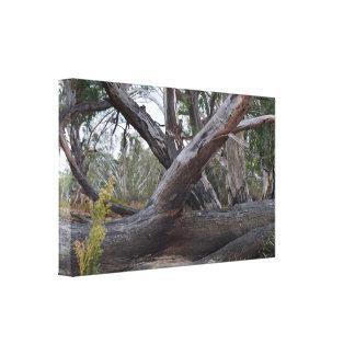 Toile L'Australie naturelle, les rondins tombés,