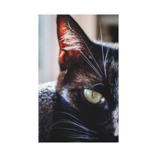 Toile Le chat noir avec les yeux verts a enveloppé la