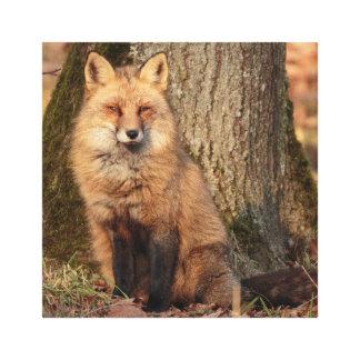 Toile Le renard rouge se repose et regarde fixement
