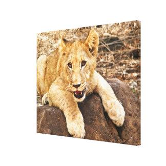 Toile Le tigre CUB prend le reniflard sur une roche
