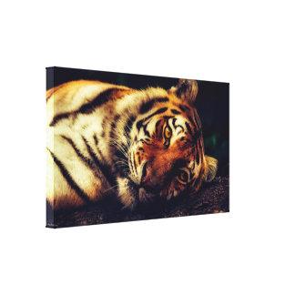 "Toile Le tigre de repos 15,47"" x 9,00"" a enveloppé la"