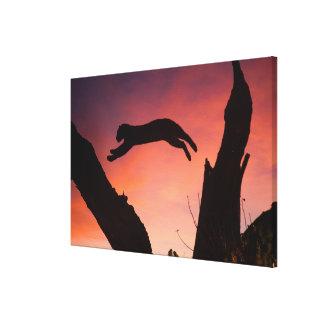 Toile Léopard sautant au coucher du soleil