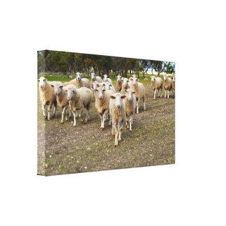 Toile Les moutons viennent marchant dans les hourras,