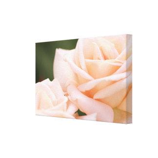Toile Les roses beiges magnifiques ont étiré la copie de