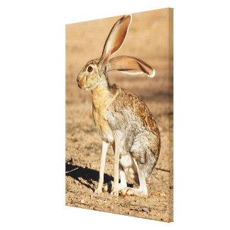 Toile Lièvre d'antilope