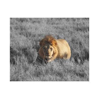 Toile Lion dans le regard d'herbe