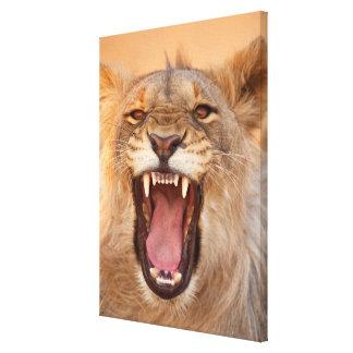 Toile Lion masculin grognant