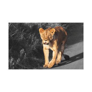 Toile Lion traversant la route