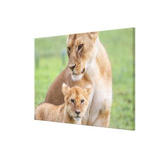Toile Lionne et lion CUB