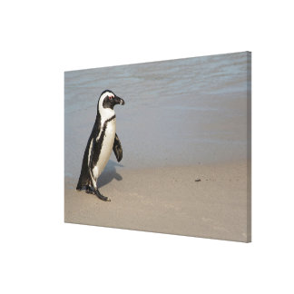Toile Marche africaine de pingouin