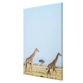 Toile Marche de deux girafes