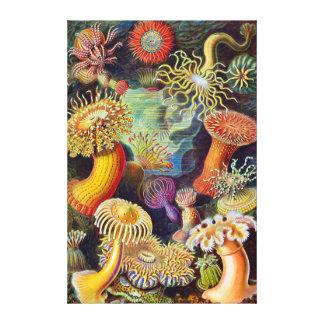 Toile Marine d'actinies d'Ernst Haeckel : Actiniae