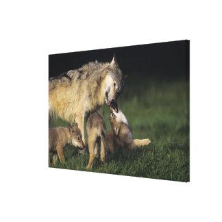 Toile Mère de loup avec de jeunes chiots