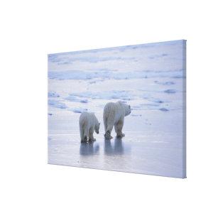 Toile Mère et CUB d'ours blanc