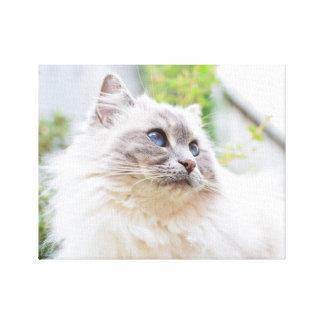 Toile mignonne de chat de Ragdoll Toiles