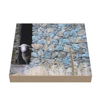 Toile Mouton Corse en Castagniccia