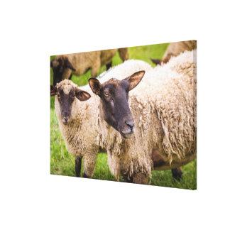 Toile Moutons de la Normandie | France