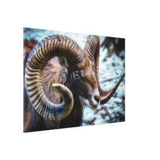 Toile Moutons sauvages de stupéfaction Mouflon