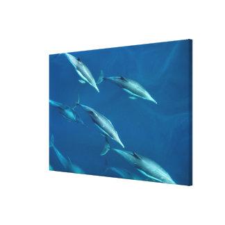 Toile Natation de cosse de dauphin