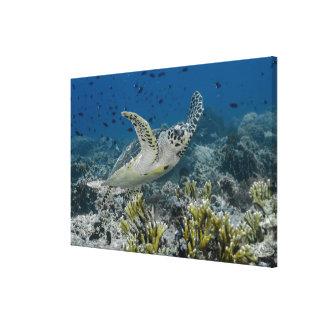 Toile Natation de tortue de mer de Hawksbill