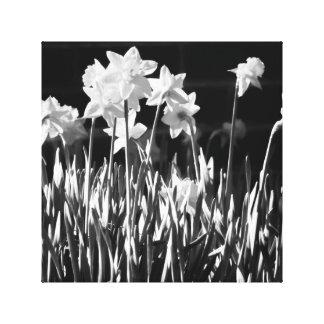 Toile noire et blanche de jonquille