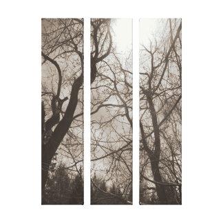 Toile noire et blanche du soleil abstrait d'arbre