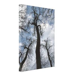 Toile nuageuse de ciel bleu d'arbres de peuplier