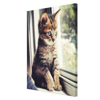 Toile Observation tigrée de chaton