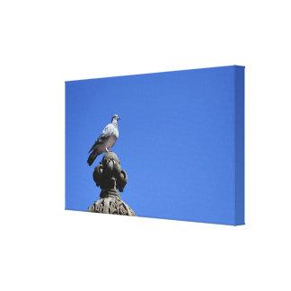 Toile Oiseau de New York City de ciel bleu de pigeon de