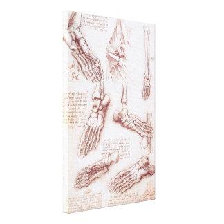 Toile Os de pied squelettiques d'anatomie humaine par da