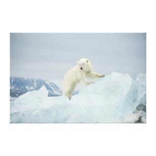 Toile Ours blanc en été