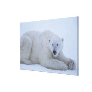 Toile Ours blanc se reposant dans la neige