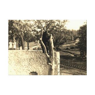 Toile Ours de photographie de 1890's de seigneurs Park